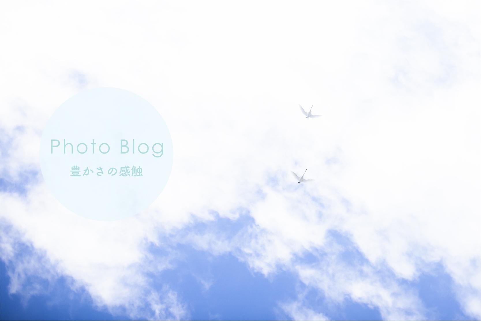 ゆったりセラピーフォトブログ